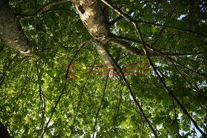 Ağaç - Gökyüzü Gergi Tavan Görselleri 336