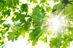 Ağaç - Gökyüzü Gergi Tavan Görselleri 9