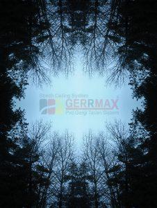 Ağaç - Gökyüzü Gergi Tavan Görselleri 98