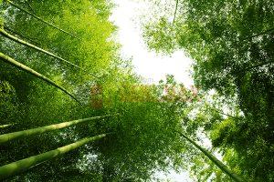Ağaç - Gökyüzü Gergi Tavan Görselleri 104