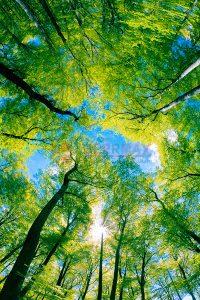 Ağaç - Gökyüzü Gergi Tavan Görselleri 107