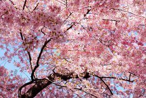 Ağaç - Gökyüzü Gergi Tavan Görselleri 115
