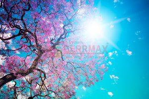 Ağaç - Gökyüzü Gergi Tavan Görselleri 116