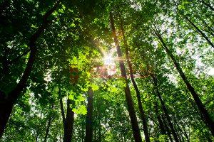 Ağaç - Gökyüzü Gergi Tavan Görselleri 11