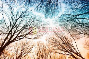 Ağaç - Gökyüzü Gergi Tavan Görselleri 120