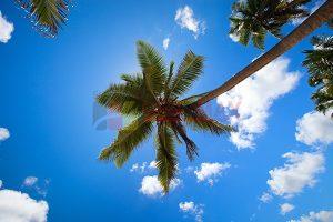 Ağaç - Gökyüzü Gergi Tavan Görselleri 124