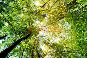Ağaç - Gökyüzü Gergi Tavan Görselleri 128