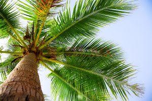 Ağaç - Gökyüzü Gergi Tavan Görselleri 131