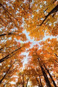 Ağaç - Gökyüzü Gergi Tavan Görselleri 133