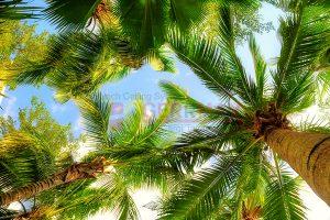Ağaç - Gökyüzü Gergi Tavan Görselleri 135