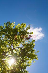 Ağaç - Gökyüzü Gergi Tavan Görselleri 13