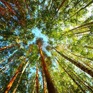 Ağaç - Gökyüzü Gergi Tavan Görselleri 140