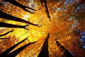 Ağaç - Gökyüzü Gergi Tavan Görselleri 142