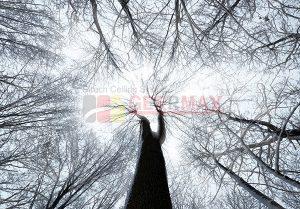 Ağaç - Gökyüzü Gergi Tavan Görselleri 146