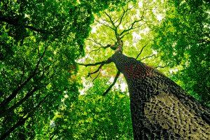 Ağaç - Gökyüzü Gergi Tavan Görselleri 151