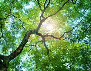 Ağaç - Gökyüzü Gergi Tavan Görselleri 155