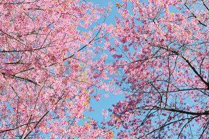 Ağaç - Gökyüzü Gergi Tavan Görselleri 164