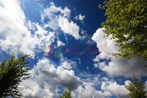 Ağaç - Gökyüzü Gergi Tavan Görselleri 167