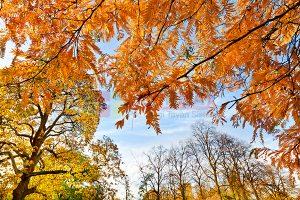 Ağaç - Gökyüzü Gergi Tavan Görselleri 171