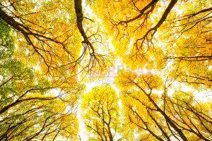Ağaç - Gökyüzü Gergi Tavan Görselleri 177