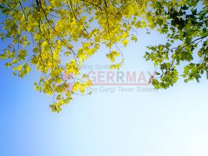 Ağaç - Gökyüzü Gergi Tavan Görselleri 17