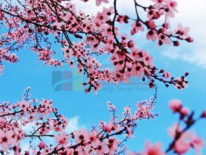Ağaç - Gökyüzü Gergi Tavan Görselleri 192