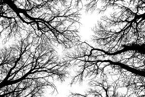 Ağaç - Gökyüzü Gergi Tavan Görselleri 193