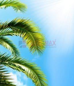 Ağaç - Gökyüzü Gergi Tavan Görselleri 19