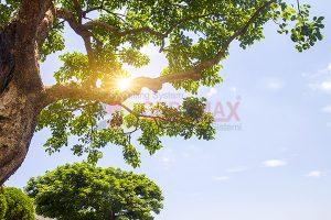Ağaç - Gökyüzü Gergi Tavan Görselleri 205