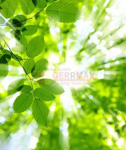 Ağaç - Gökyüzü Gergi Tavan Görselleri 20