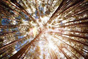 Ağaç - Gökyüzü Gergi Tavan Görselleri 209