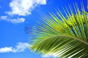 Ağaç - Gökyüzü Gergi Tavan Görselleri 210