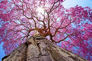 Ağaç - Gökyüzü Gergi Tavan Görselleri 212