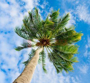 Ağaç - Gökyüzü Gergi Tavan Görselleri 21