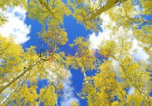 Ağaç - Gökyüzü Gergi Tavan Görselleri 218
