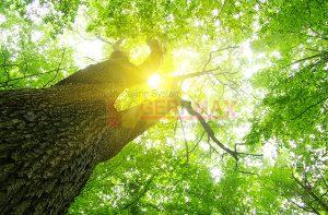 Ağaç - Gökyüzü Gergi Tavan Görselleri 219