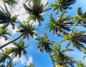 Ağaç - Gökyüzü Gergi Tavan Görselleri 221