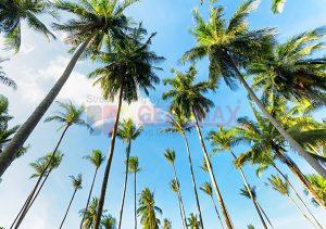 Ağaç - Gökyüzü Gergi Tavan Görselleri 223