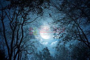 Ağaç - Gökyüzü Gergi Tavan Görselleri 22