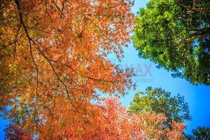 Ağaç - Gökyüzü Gergi Tavan Görselleri 228