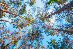 Ağaç - Gökyüzü Gergi Tavan Görselleri 230