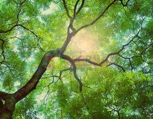 Ağaç - Gökyüzü Gergi Tavan Görselleri 236
