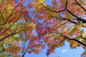 Ağaç - Gökyüzü Gergi Tavan Görselleri 251