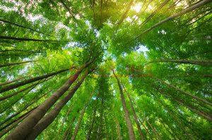 Ağaç - Gökyüzü Gergi Tavan Görselleri 254