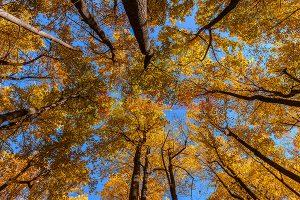 Ağaç - Gökyüzü Gergi Tavan Görselleri 259
