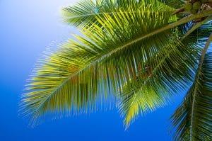 Ağaç - Gökyüzü Gergi Tavan Görselleri 260