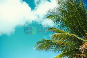 Ağaç - Gökyüzü Gergi Tavan Görselleri 261