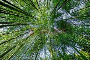 Ağaç - Gökyüzü Gergi Tavan Görselleri 264