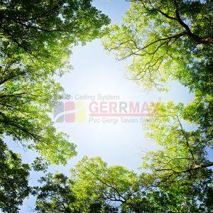Ağaç - Gökyüzü Gergi Tavan Görselleri 266