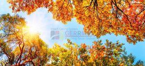 Ağaç - Gökyüzü Gergi Tavan Görselleri 283